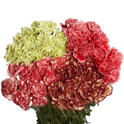 Novelty Assorted Carnations (200 Stems)
