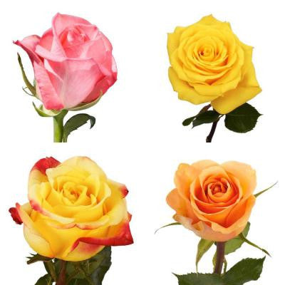 Assorted Roses (50 Stems) Includes Free Shipping - 2 Different Colors