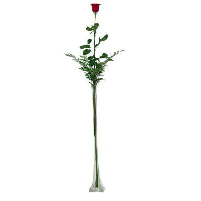 Stunning 4 ft. Single Stem Rose in Clear Vase Overnight Shipping Included