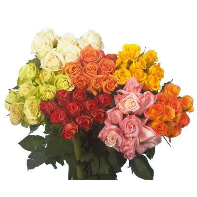 Assorted Color Roses Roses (75 Extra Long Stems) Includes Free Shipping