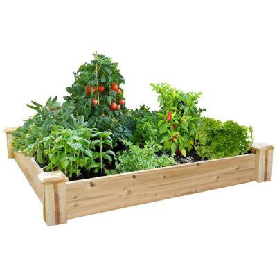 4 ft. x 4 ft. x 7 in. Cedar Raised Garden Kit (2-Pack)