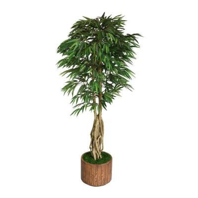 83 in. Tall Willow Ficus with Multiple Trunks in 16 in. Fiberstone Planter