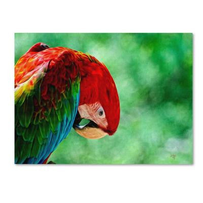 30 in. x 47 in. Colorful Macaw Canvas Art