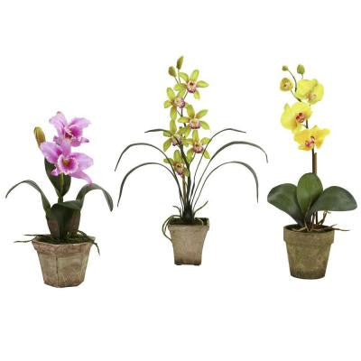 Potted Orchid Mix in Lavender/Gold/Yellow (Set of 3)