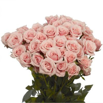Pink Spray Roses (100 Stems - 350 Blooms) Includes Free Shipping