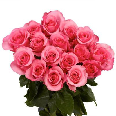 Hot Pink Color Roses (250 Stems) Includes Free Shipping