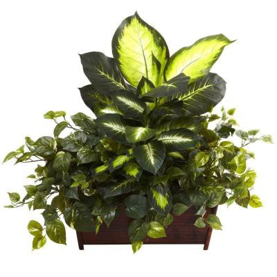Golden Dieffenbachia, Philo and Pothos with Wood Planter