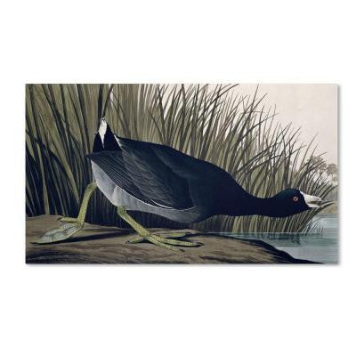 30 in. x 47 in. American Coot Canvas Art