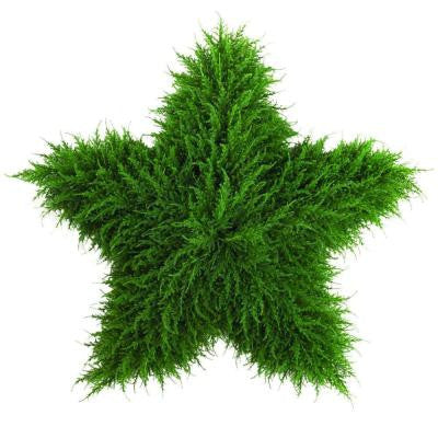 36 in. Topiary Star Wall Decoration