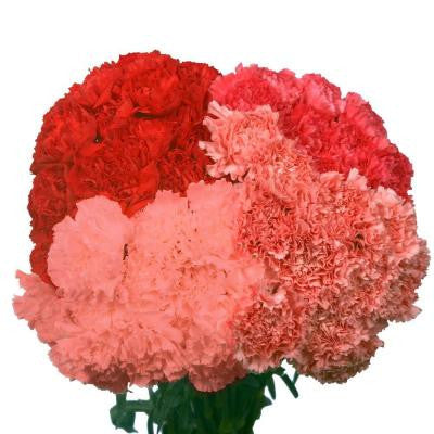 Valentine's Day Carnations (200 Stems)