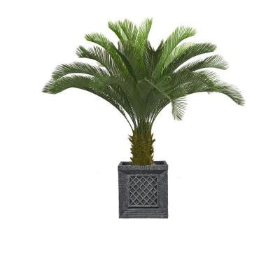 54 in. Tall Cycas Palm Tree in Planter