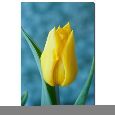 24 in. x 16 in. Yellow Tulip Canvas Art