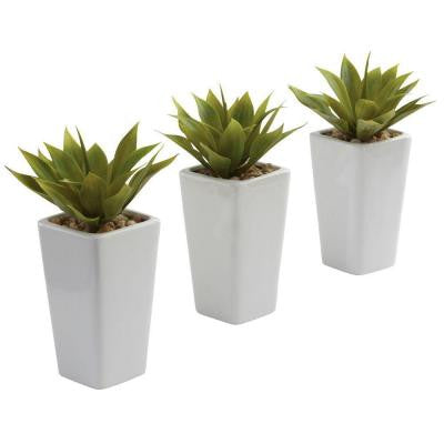 Mini Agave with White Planter (Set of 3)