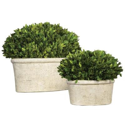 Preserved Boxwood Oval Topiaries (Set of 2)