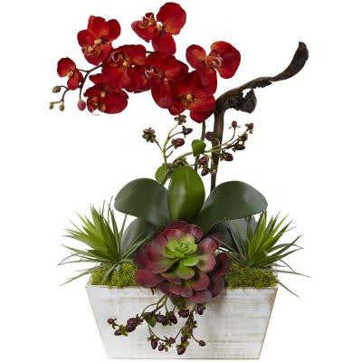 21 in. Seasonal Orchid and Succulent Garden with White Wash Planter