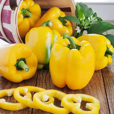 4 in. Bell-Yellow Pepper
