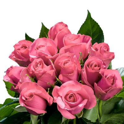 Pink Roses Bulk (100 Stems) Includes Free Shipping
