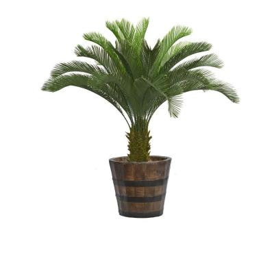 56 in. Tall Cycas Palm Tree in Planter