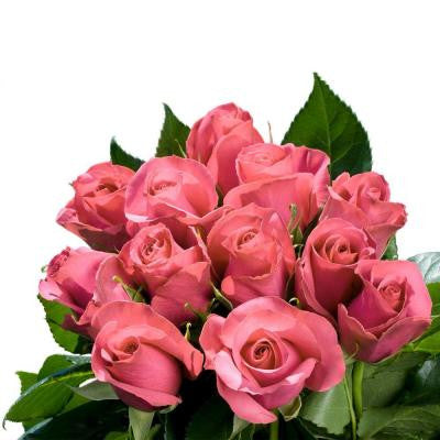 Pink Roses Bridal (250 Stems) Includes Free Shipping