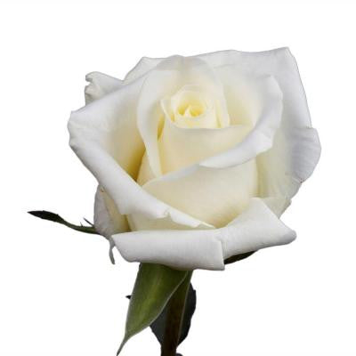White Roses Valentines Day Flowers (100 Stems) Free Delivery
