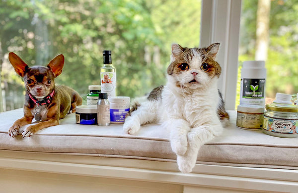 Top 5 Healthy Supplements for Dogs & Cats