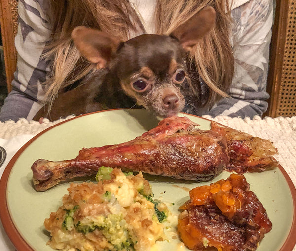 6 Thanksgiving Foods You Can Share With Your Pets