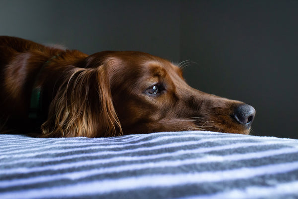 8 Common Warning Signs Your Pet Is in Pain