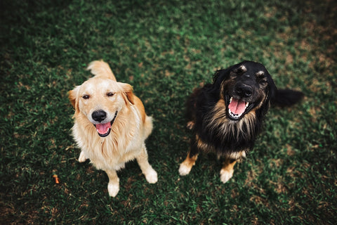 CocoTherapy dogs and ketogenic diet