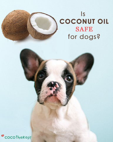 Coconut and Dog: Is CocoTherapy Coconut Oil Safe for Dogs?