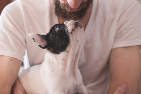 Dog with man and How MCFAs Train the Immune System