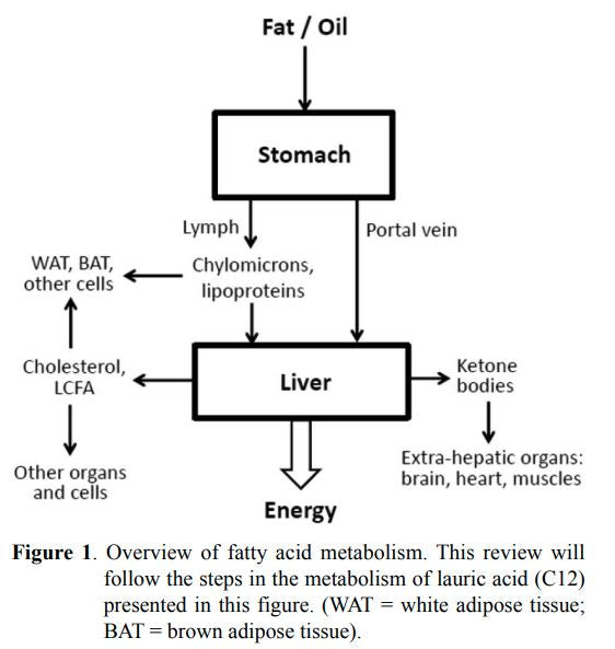 Overview of fatty acid metabolism