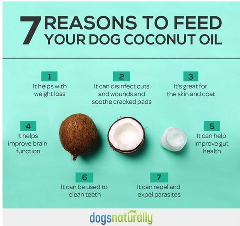 Top 7 reasons to coconut oil for dogs