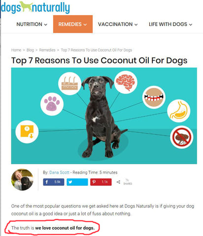 Top 7 reasons to use coconut oil for dogs