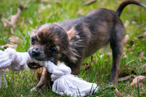 Environmental Enrichment for Dogs