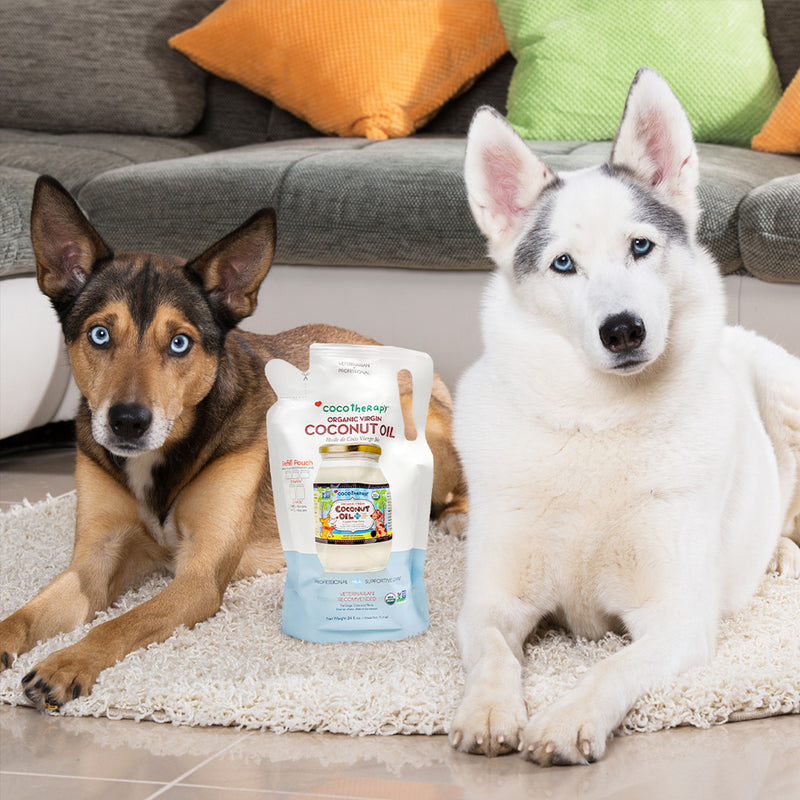 coconut oil for dogs |  coconut oil good for dogs | coconut oil cats