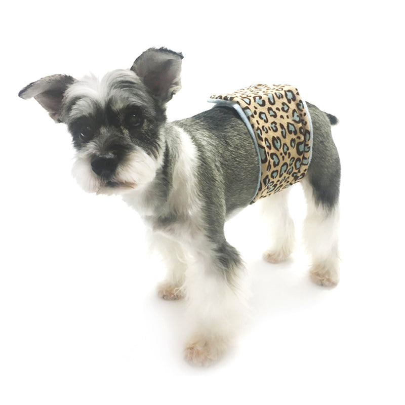 Wild Child Leopard Male Dog Belly Band