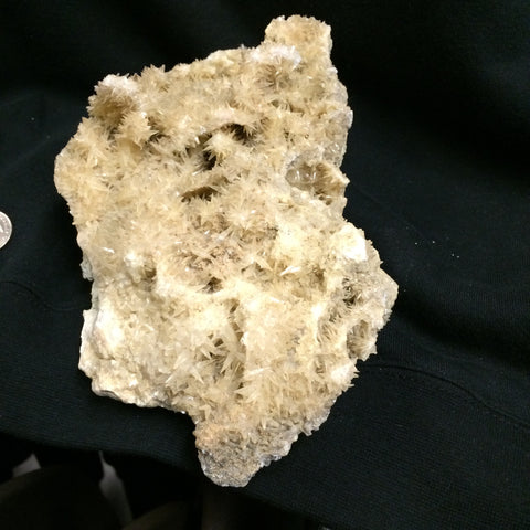 Shark tooth Calcite