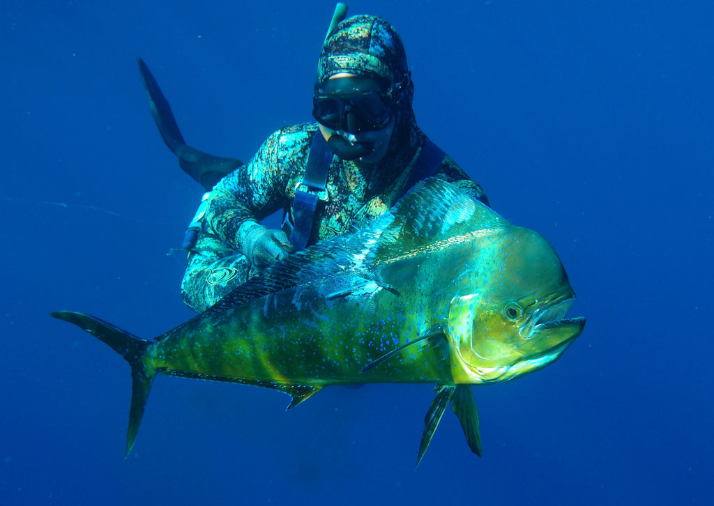 Just Starting Spearfishing? Comprehensive Guide Right Here!