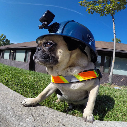 Atom The Pug GoPro Photos