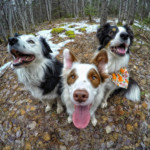Dog training with your GoPro