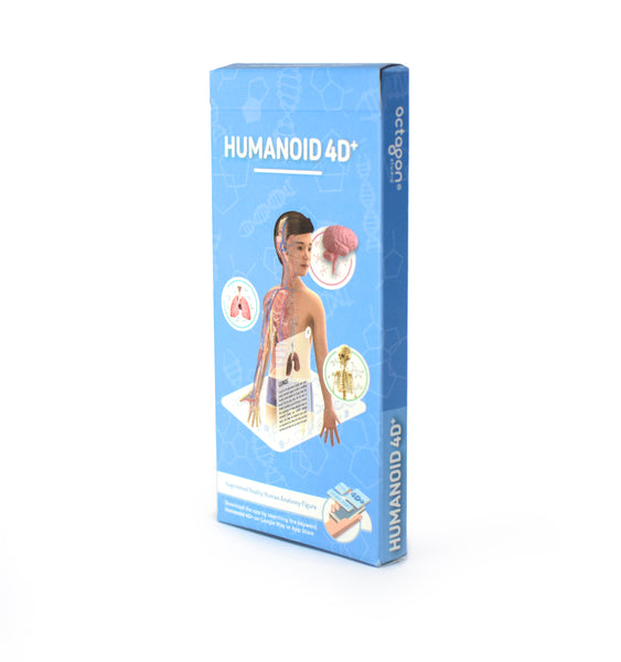 Humanoid 4D+ Flashcards