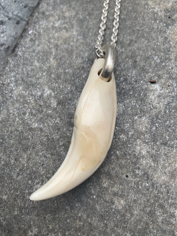 Bear tooth ghost necklace