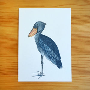 Shoebill - Original Painting
