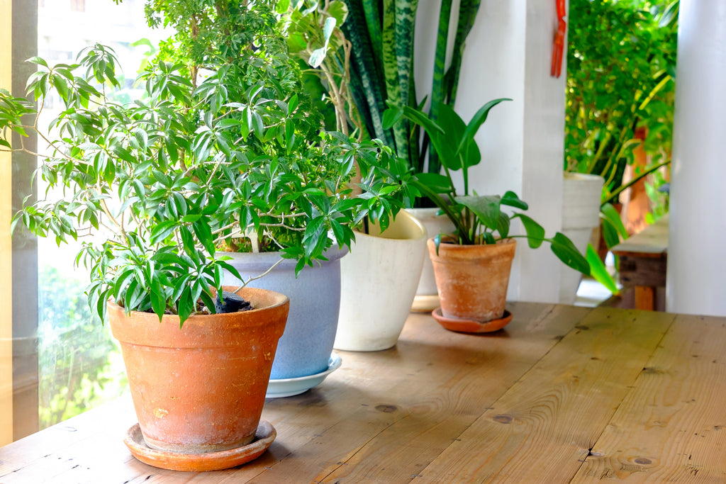 House-plants-detoxify-new-year