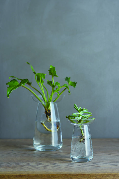 Kinto Japan Aqua Culture Vase on DLK | designlifekids.com