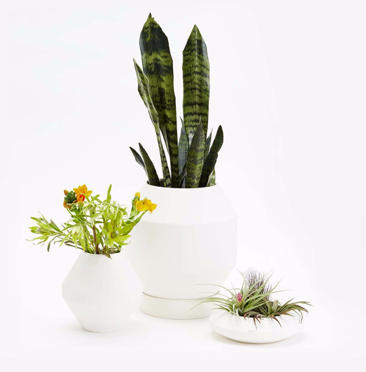 Areaware Radial Vessels Vase and Planters on DLK