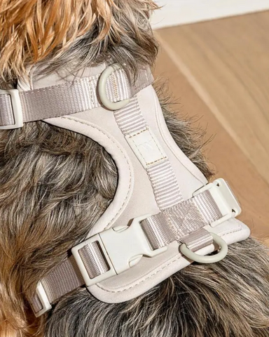 Wild One Modern Gray Dog Harness on Design Life KidsWild One Modern Gray Dog Harness on Design Life Kids