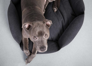 Velvet Hippo Hex Cushion Dog Bed on DLK | designlifekids.com