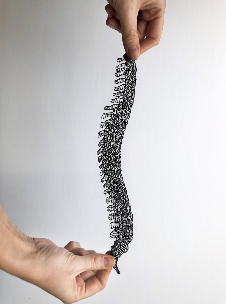 Laser-cut Papercutting Artwork - Anatomical Spine