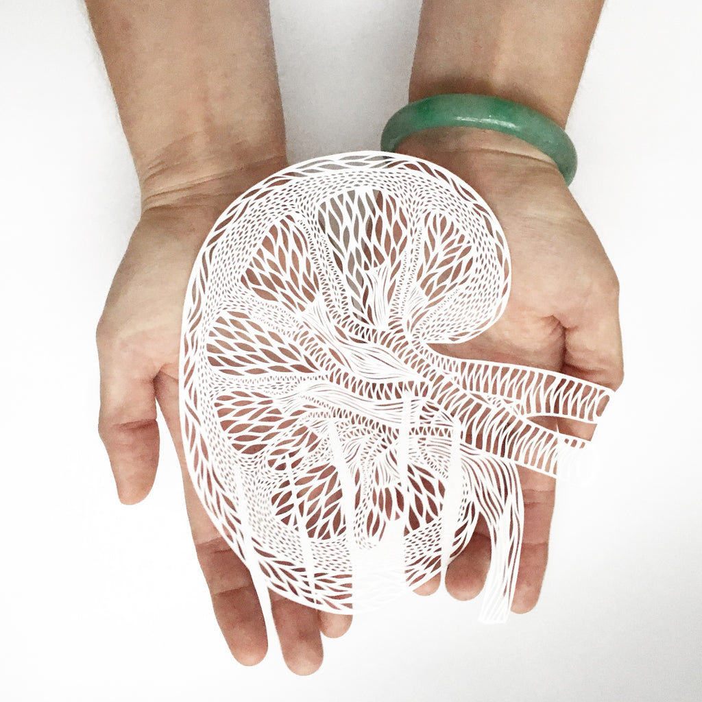 Laser-Cut Papercutting Artwork - Anatomical Kidney